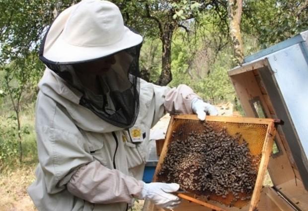 Noile măsuri UE distrug apicultura din Marmureş.
